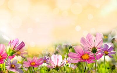 Greenbase Garten-Hilfe: 8 Tipps um Ihren Boden perfekt zu machen!